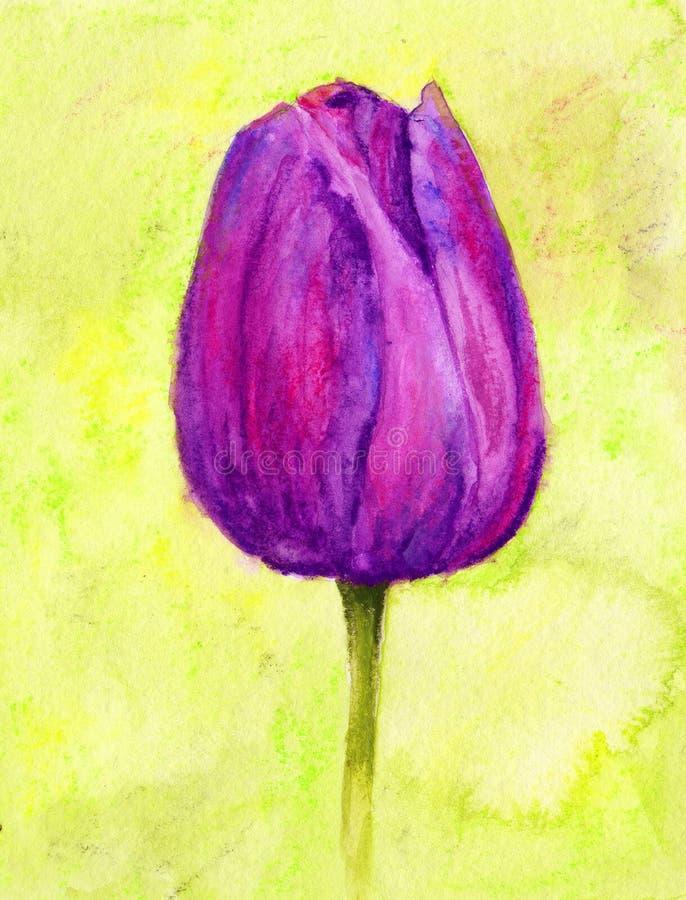 Tulip roxo ilustração royalty free