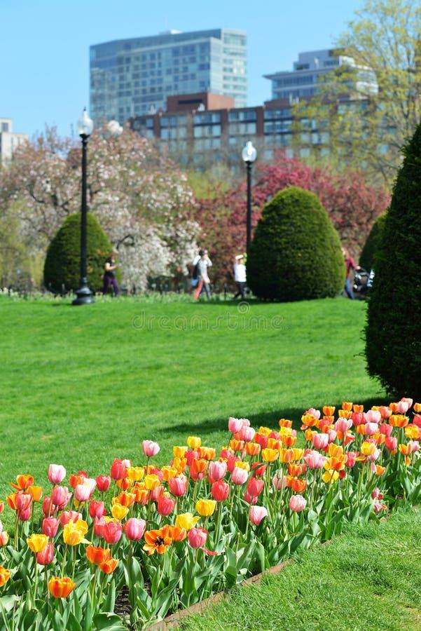 Tulip Season foto de archivo