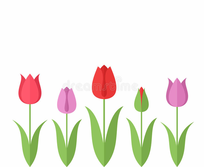 Tulip. Set. Vector illustration (EPS 10&#x29 stock illustration