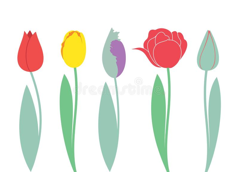 Tulip. Set. Vector illustration EPS vector illustration