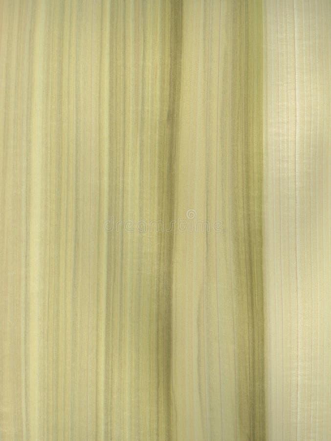 Free Tulip Tree Texture Stock Photo - 15547880