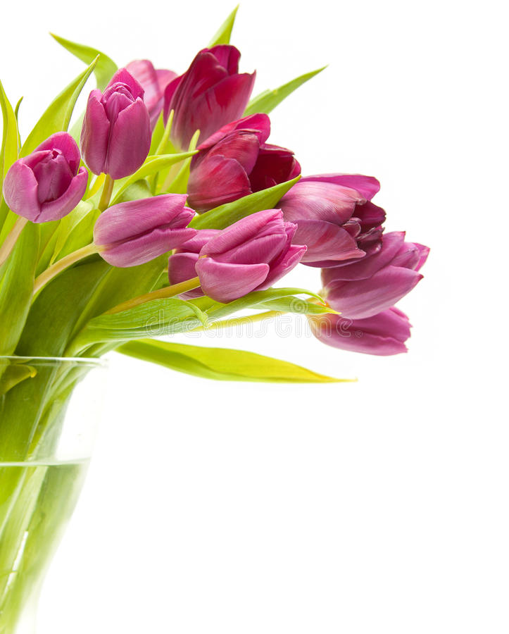 tulip in a vase royalty free stock photo