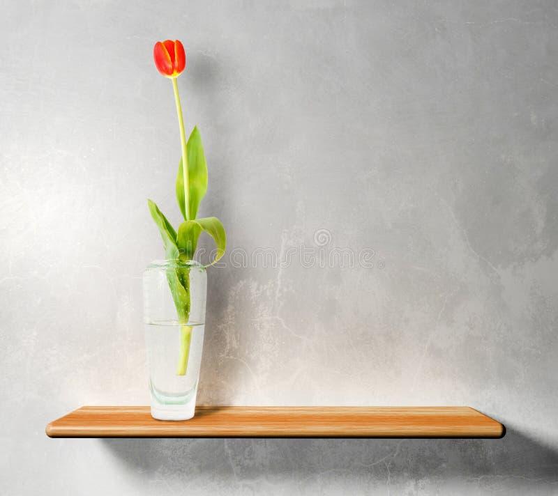 Tulip vermelho na prateleira de madeira fotografia de stock