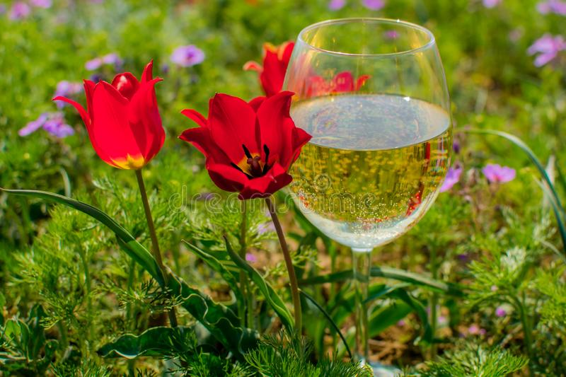 Tulip and wine glass royalty free stock image