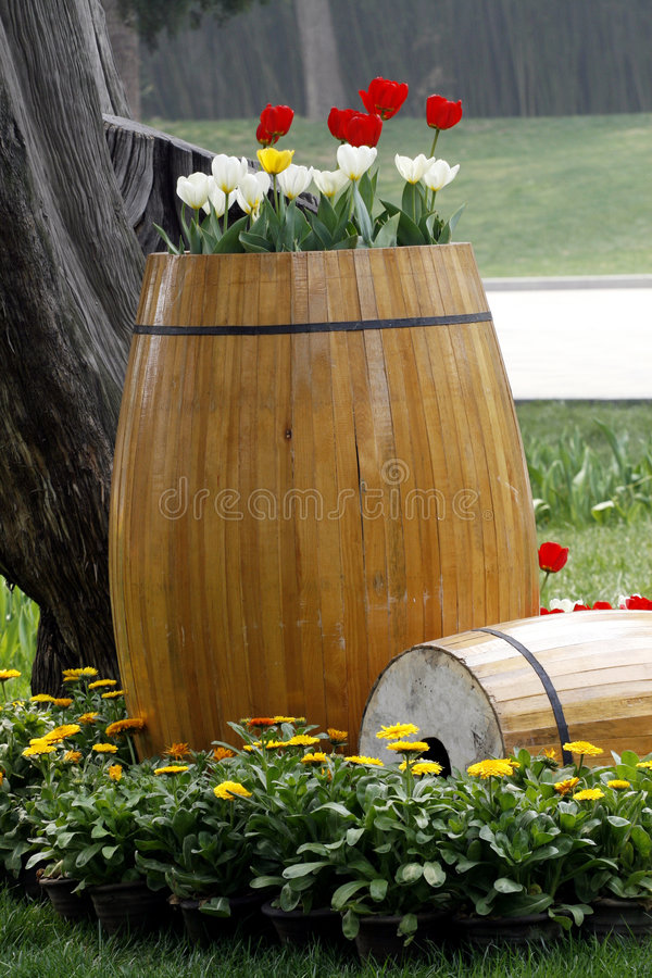 Tulip on the wooden cask