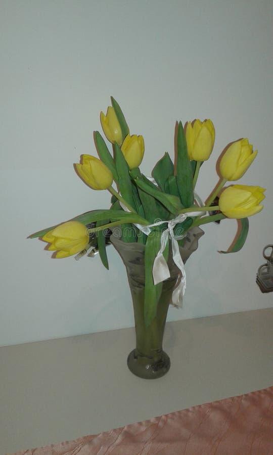 Tulipa amarela fotografia de stock