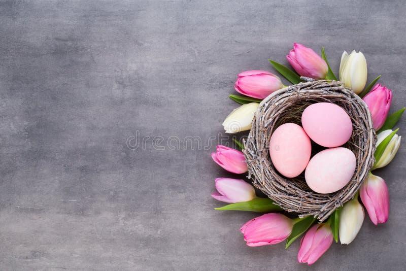 A tulipa cor-de-rosa com ovos cor-de-rosa aninha-se em um fundo cinzento Cartão de cumprimentos de Easter imagem de stock