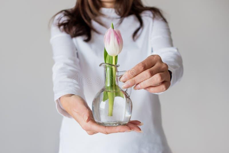 Tulipa cor-de-rosa da mola no vaso pequeno foto de stock