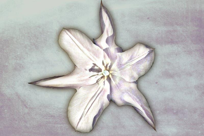 Tulipa da pintura a ?leo ilustração stock