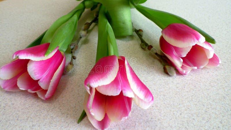 A tulipa da vista dianteira floresce em um fundo branco imagens de stock royalty free