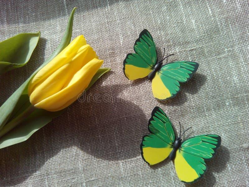 Tulipa e butterflie amarelos foto de stock royalty free