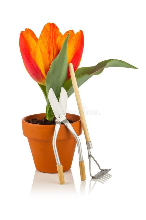 Tulipa e ferramentas de jardim imagens de stock royalty free