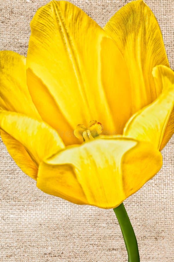 Tulipa estilizado amarela em um fundo marrom, close-up foto de stock royalty free