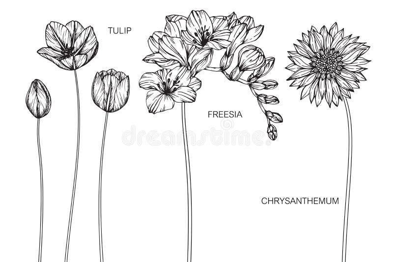 A tulipa, frésia, crisântemo floresce o desenho e o esboço ilustração do vetor