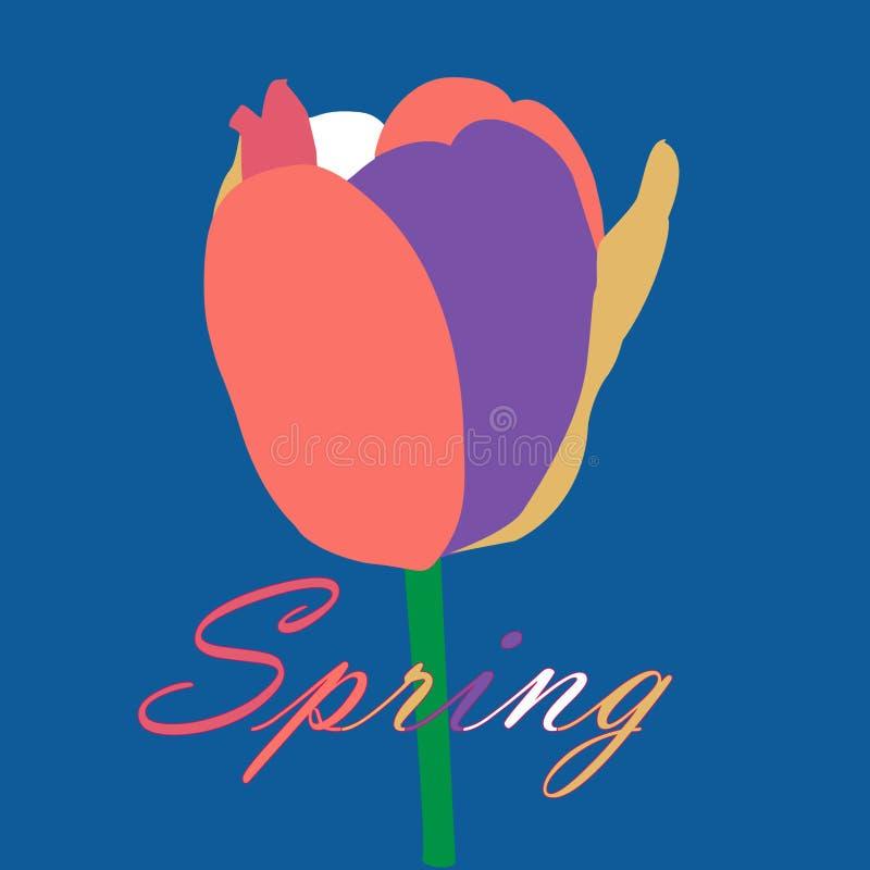 Tulipa muito-colorida abstrata com as pétalas corais de vida em um fundo azul, cartão da mola ilustração royalty free
