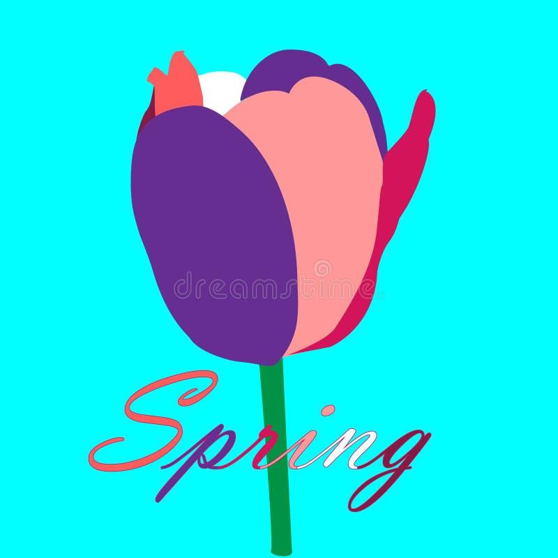 Tulipa muito-colorida abstrata em um fundo de turquesa, cartão da mola com a única tulipa muito-colorida sumário e letras ilustração do vetor