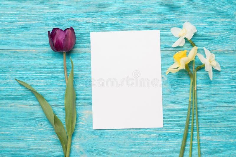 Tulipa, prímulas, cartão de papel, fundo de turquesa fotos de stock royalty free