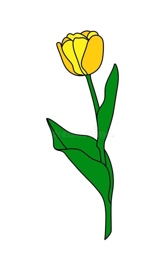 Tulipa ilustração royalty free