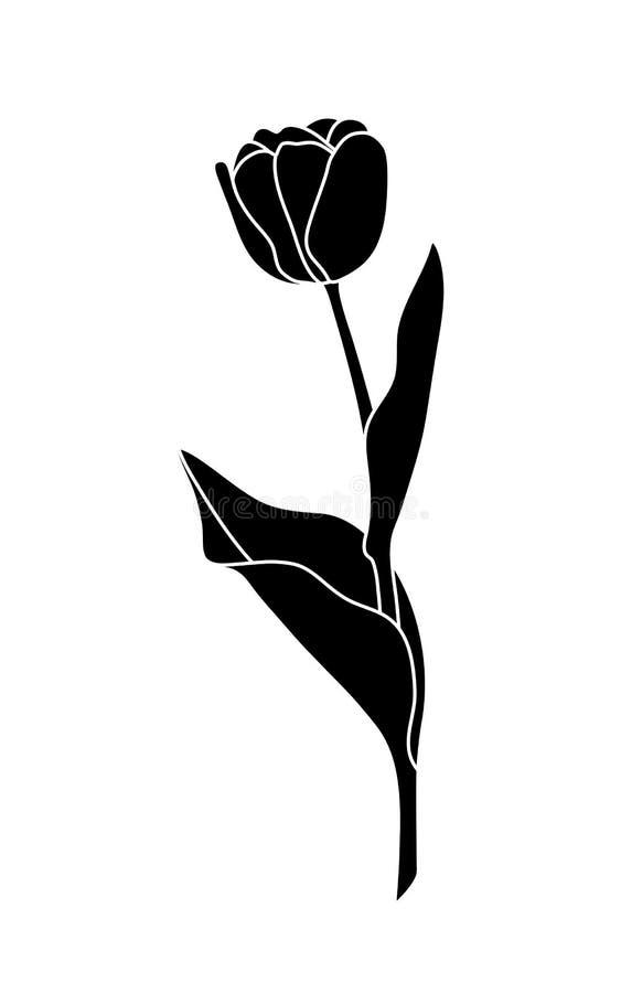 Tulipa ilustração do vetor