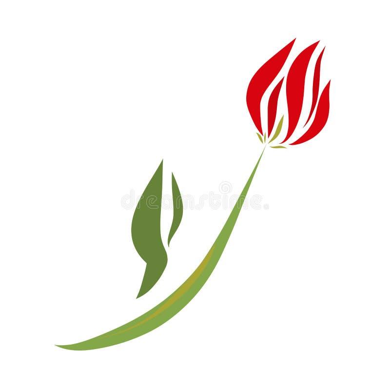 Tulipa vermelha delicada, plantas bonitas, um presente do seu amado ilustração stock