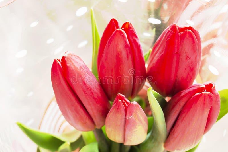Tulipa vermelha do ramalhete com folha verde imagem de stock royalty free