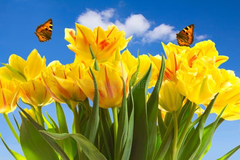 Tulipanów motyli niebieskie niebo obrazy royalty free