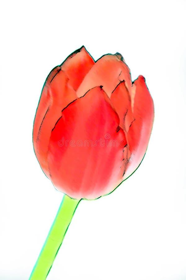 tulipan abstrakcyjne ilustracji