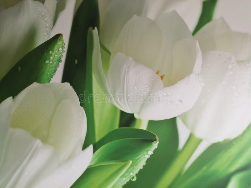 Tulipan flor naturalizado imagen verde imágenes de archivo libres de regalías