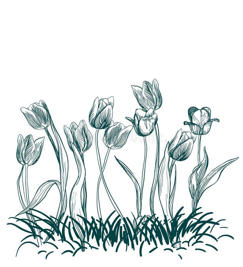 Tulipan trawy kwiat grawerujący wektorowy ilustracyjny nakreślenie royalty ilustracja