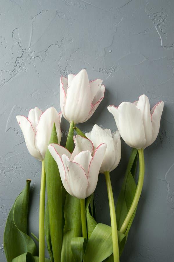 Download Tulipanes foto de archivo. Imagen de romántico, regalo - 100533014