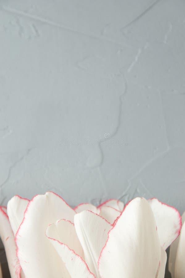 Download Tulipanes imagen de archivo. Imagen de decoración, romántico - 100533107