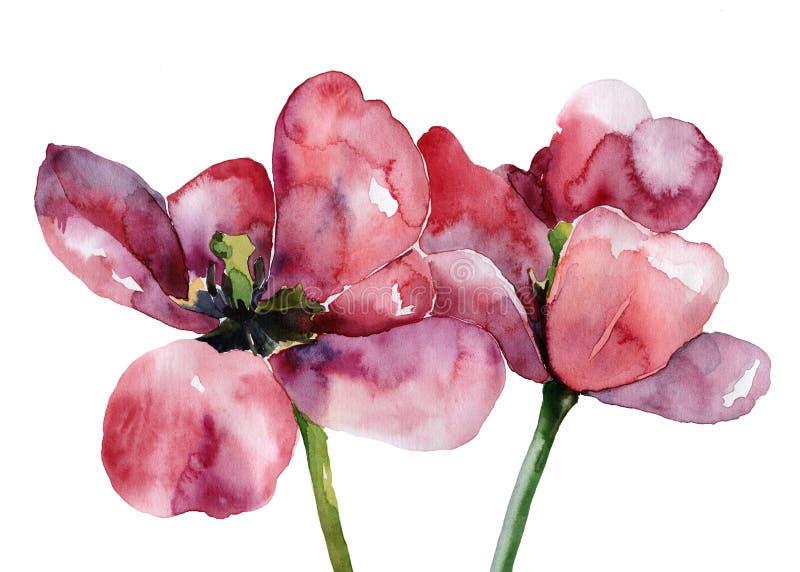 Tulipanes stock de ilustración