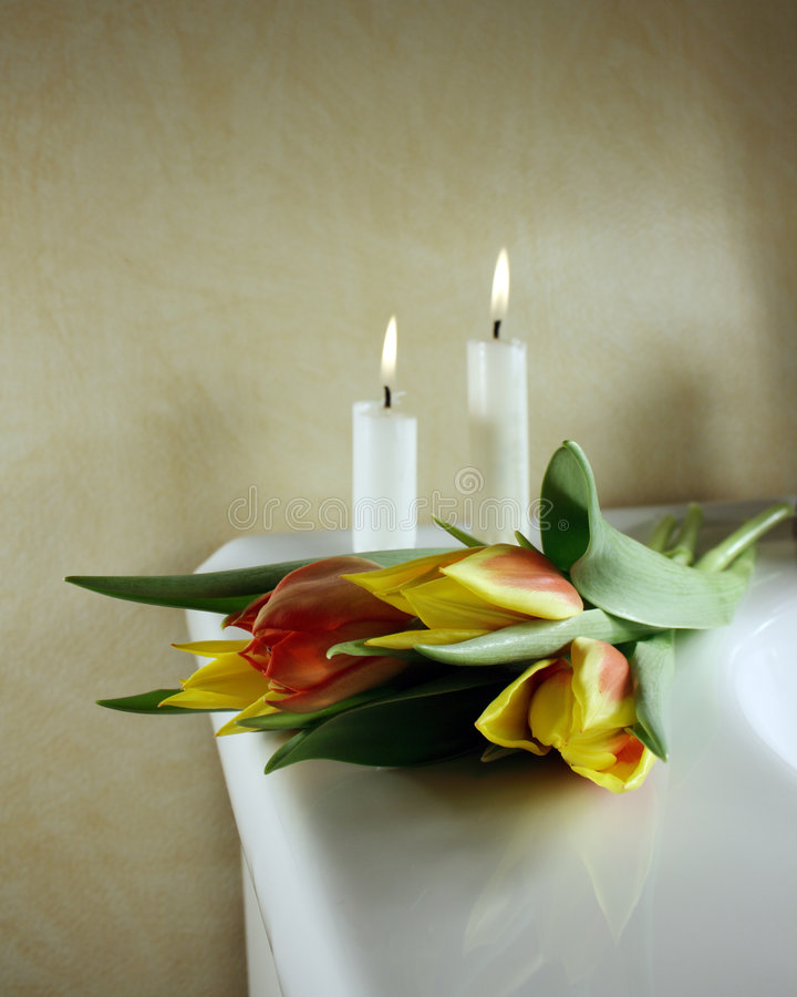 Tulipanes foto de archivo libre de regalías