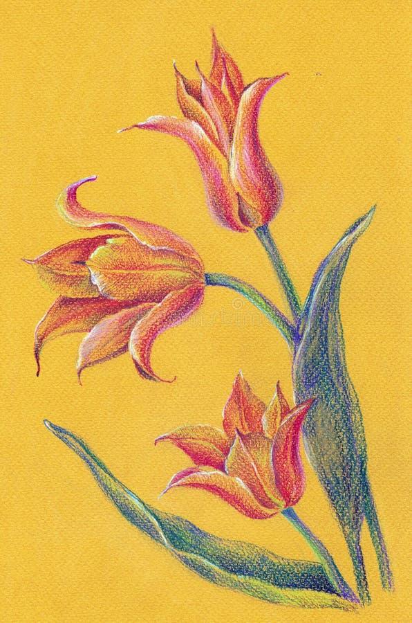 Tulipanes amarillos del ramo del lápiz del color en un fondo amarillo Fondo floral abstracto stock de ilustración