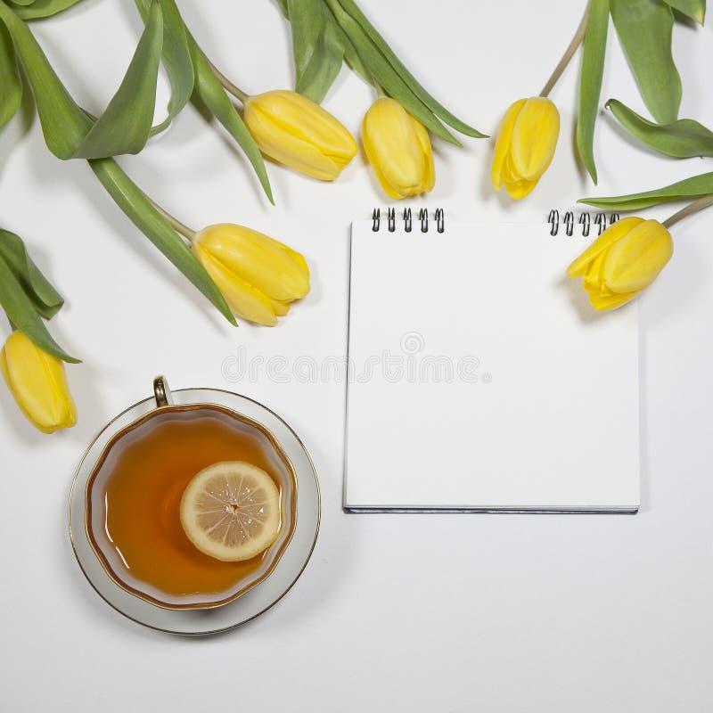 Tulipanes amarillos en un fondo blanco fotos de archivo libres de regalías
