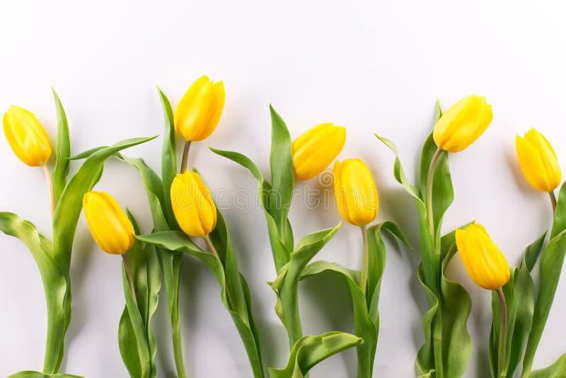 Tulipanes amarillos hermosos en un fondo blanco plased en la endecha plana de la fila, visión superior, fotografía de archivo libre de regalías