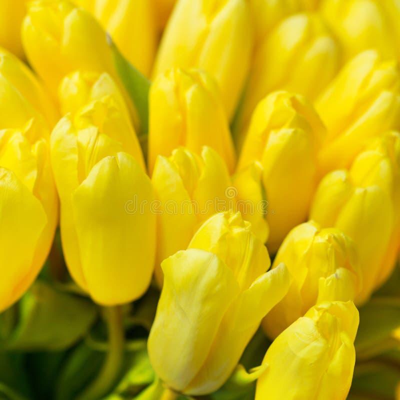 Tulipanes amarillos hermosos, ramo grande fotos de archivo
