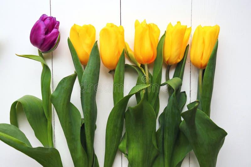 Tulipanes amarillos y púrpuras hermosos en el fondo blanco, visión superior fotografía de archivo