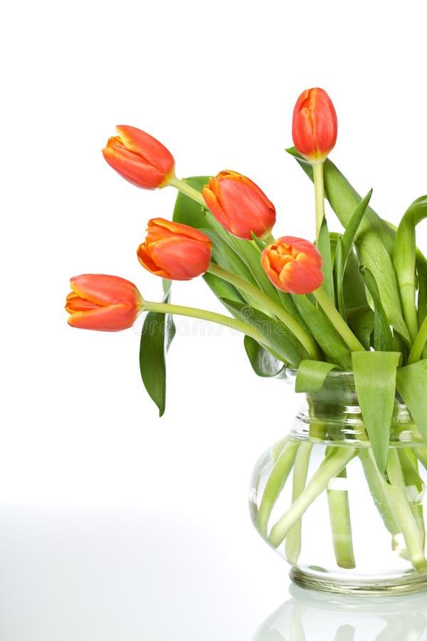 Tulipanes anaranjados hermosos en el florero de cristal - aislado imagenes de archivo
