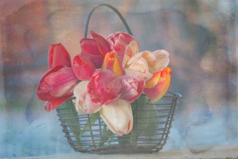 Tulipanes apenados en una cesta de alambre imagenes de archivo