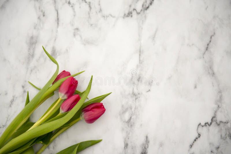 Tulipanes bastante rojos en un fondo de mármol imágenes de archivo libres de regalías