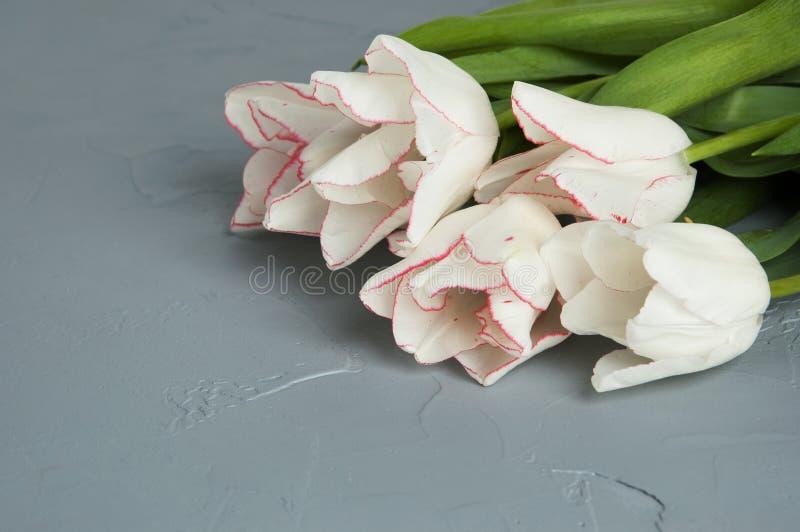Download Tulipanes blancos foto de archivo. Imagen de tarjeta - 100532764