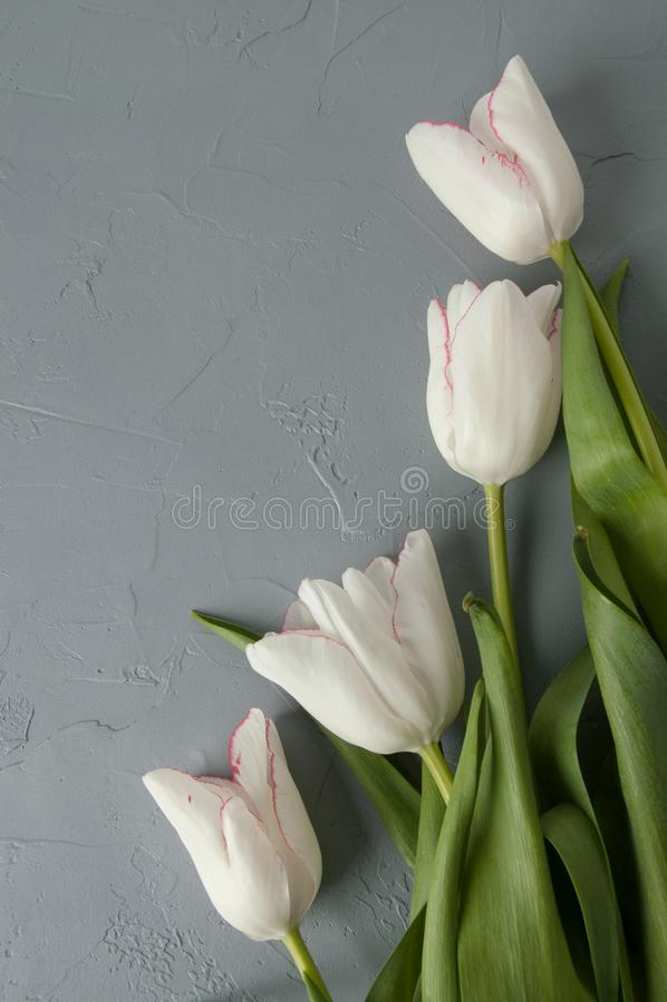 Download Tulipanes blancos imagen de archivo. Imagen de regalo - 100532833