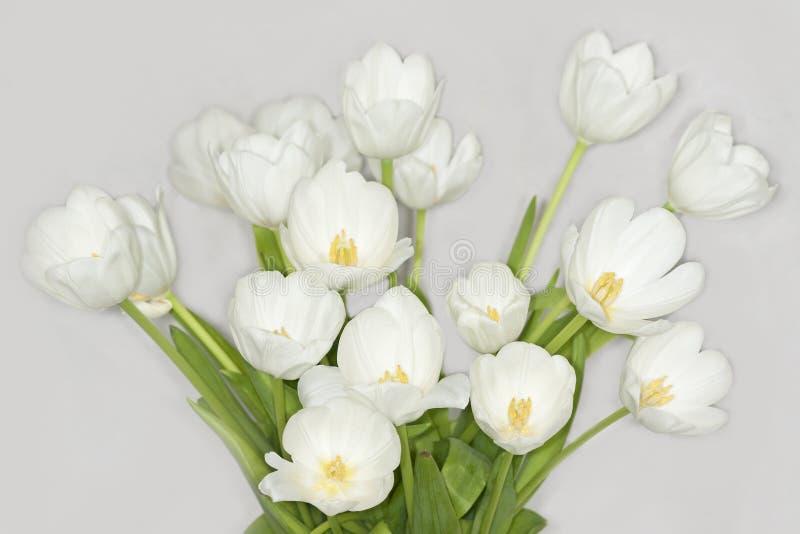 Tulipanes blancos foto de archivo
