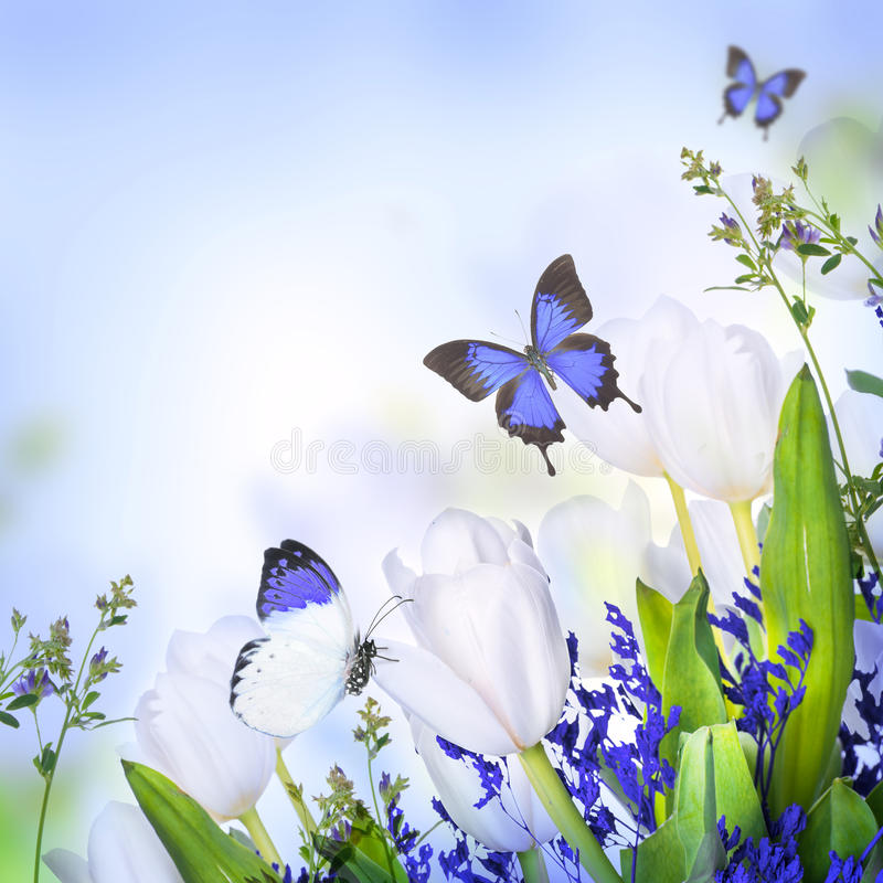 Tulipanes blancos con la hierba y la mariposa azules libre illustration