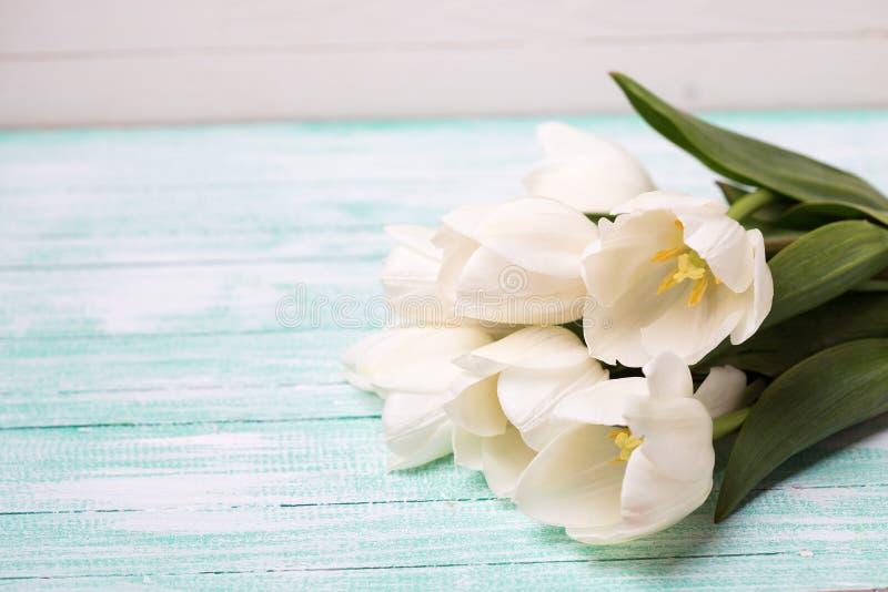 Tulipanes blancos frescos en tablones pintados turquesa imagenes de archivo