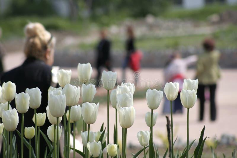 Tulipanes blancos y gente que recorren detrás de los imagen de archivo libre de regalías
