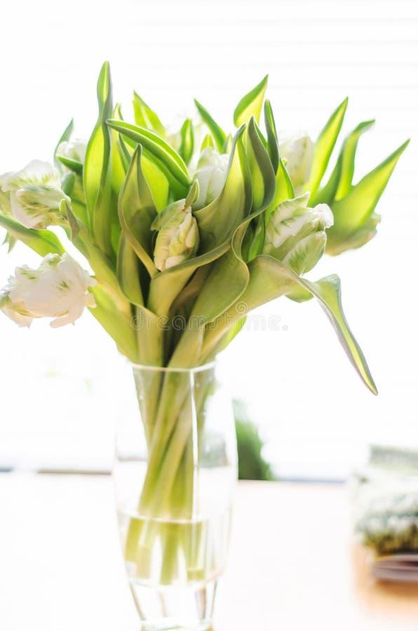 Tulipanes blancos y verdes fotos de archivo libres de regalías