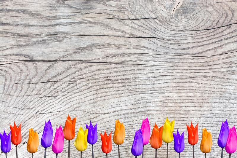 Tulipanes coloridos brillantes en la superficie de madera con pátina foto de archivo libre de regalías