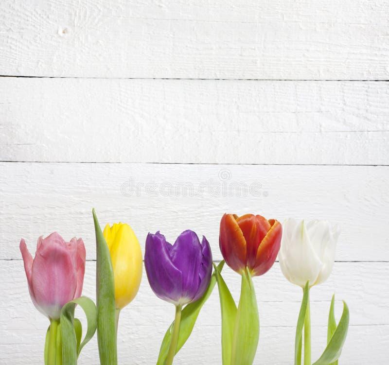 Tulipanes coloridos de pascua de la primavera en el fondo blanco del vintage fotos de archivo